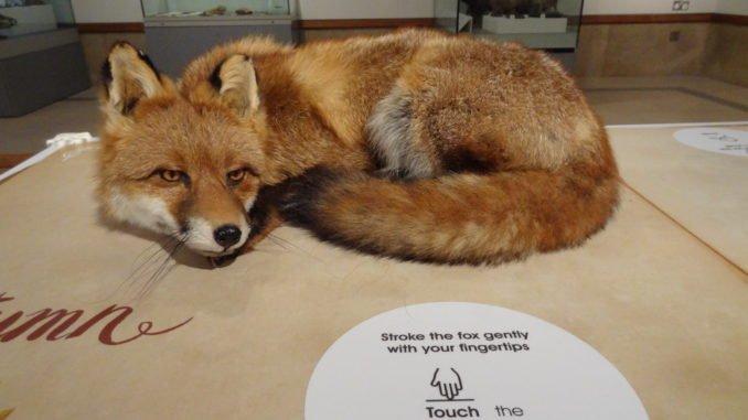 Interactive Fox
